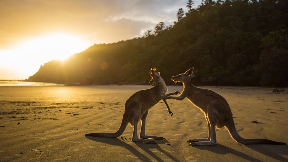 Unieke kampeerervaring in Australië
